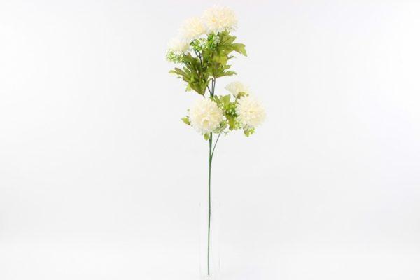 Chrysanthemen Zweig